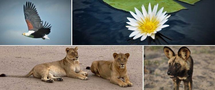 xigera-safari-lodge-6