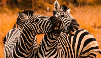 Sun City & Pilanesberg Nature Reserve Tour