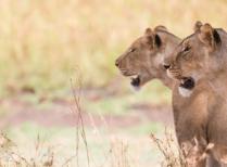 Kruger Park Uncovered