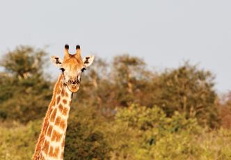 Kruger Park Safari Getaway