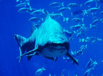 Half Day uShaka Marine World