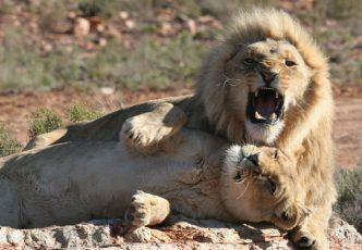 Aquila Wildlife Safari Tour