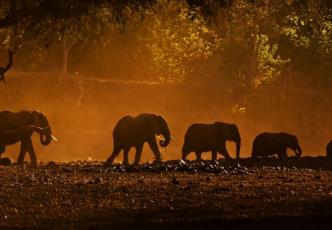 Etosha & Zambezi