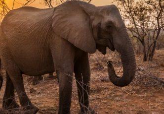 Kruger Park Explorer
