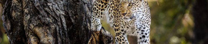 Best Times to Travel to Botswana