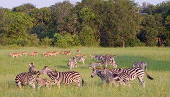 Afternoon Kruger Park Open Vehicle Safari