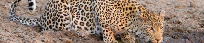 Sabi Sand Game Reserve – The Epitome of Safari Dreams
