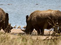 Tala Game Reserve safari – half day shore excursion