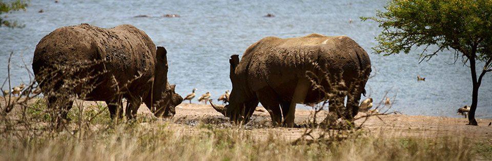 Tala Game Reserve safari – half day shore excursion