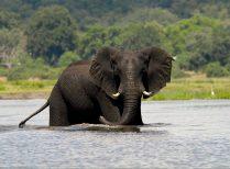 Chobe Day Trip – Departing Victoria Falls Town