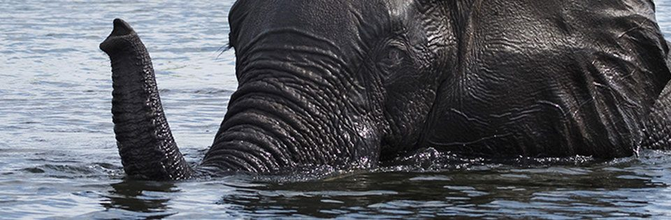 The Best of Southern Africa Safaris