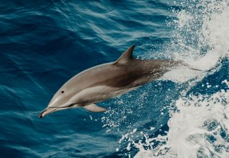 Walvis Bay Dolphin & Seal Catamaran Cruise