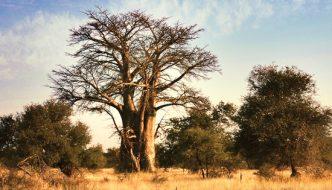 The Kruger National Park